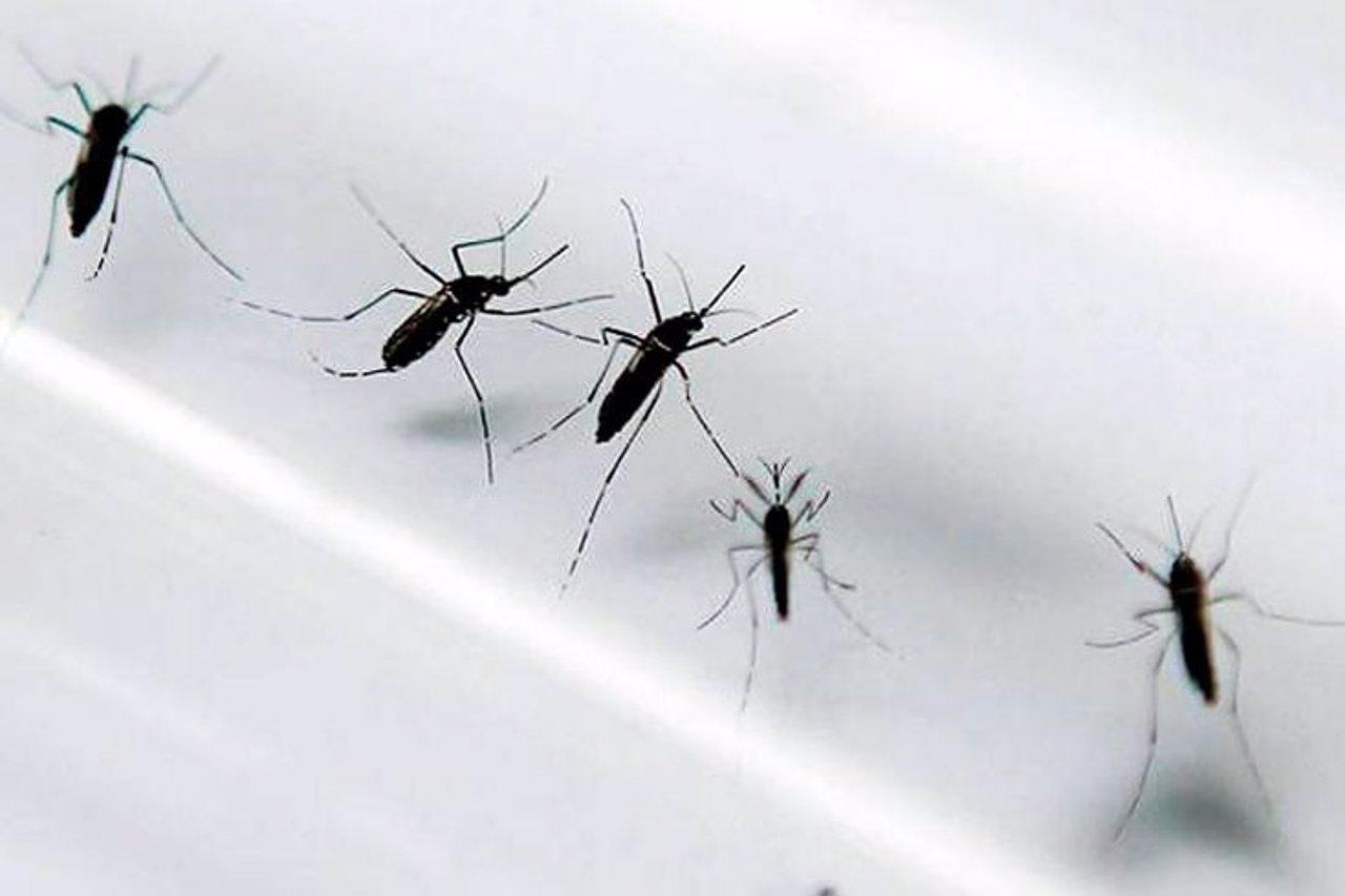 Minsalud confirma nueve casos del virus Zika en Colombia