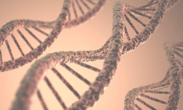 Genoma, epigenoma