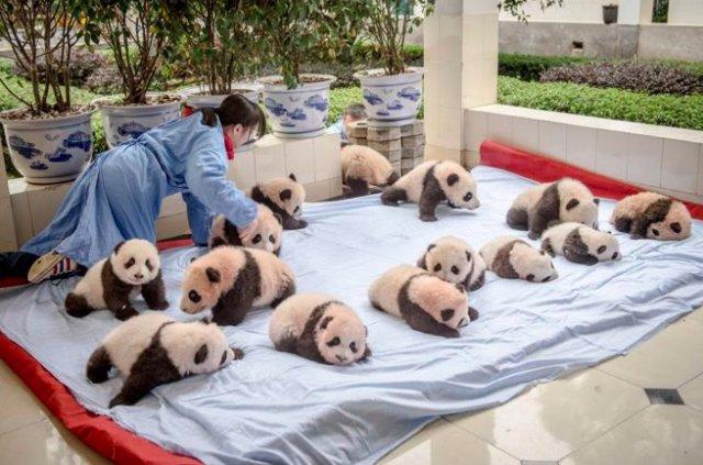 pandas - imgur