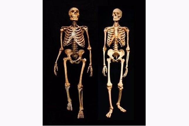 Esqueletos de neandertal y humano moderno
