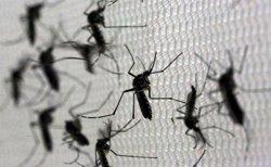 Bolivia confirma cinco casos de zika en el país, tres de ellos importados de Brasil (PAULO WHITAKER / REUTERS)