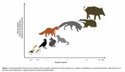 Los mamíferos carnívoros en campos abandonados del Mediterráneo son clave para frenar la crisis medioambiental