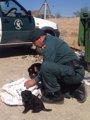 Foto: Dos acusados de abandonar ocho cachorros de perro en un contenedor