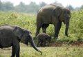 La verdadera ruta de los elefantes que atraviesa Birmania y la India