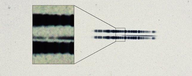 Espectro de la placa de 1917 sobre la estrella de van Maanen