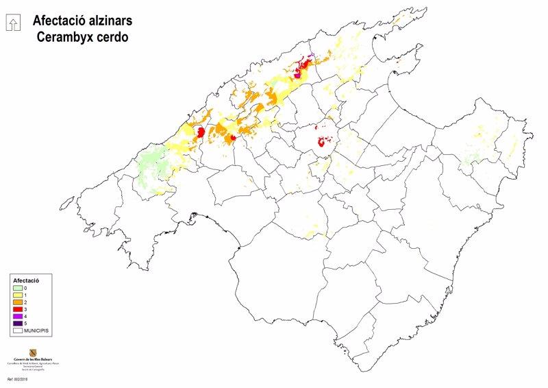 El Govern intensifica la lucha contra el escarabajo 'banyarriquer' en Mallorca