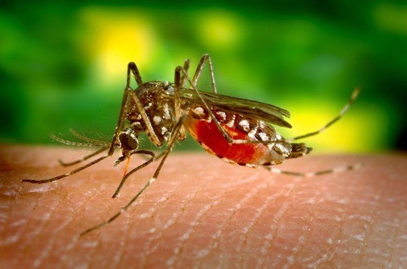 Sanidad eleva a 105 los casos de Zika en España importados de zonas de riesgo