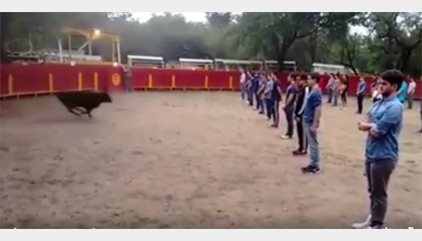 Un toro sale a una plaza llena de personas ¡y no les ataca!
