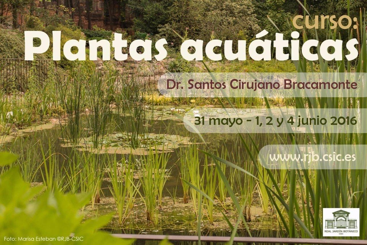 El real jard n bot nico imparte un curso sobre plantas for Cursos jardin botanico 2016