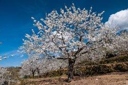 Les exportacions catalanes de flors i plantes van créixer un 15% fins al febrer (REMITIDA)
