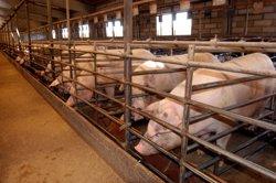 L'Estat rebaixa els mòduls de l'IRPF per a pagesos i ramaders catalans (DAR)