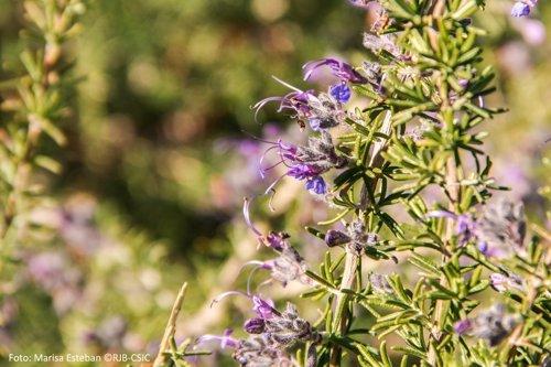 El real jard n bot nico ofrece un curso desde hoy sobre la for Jardin botanico cursos