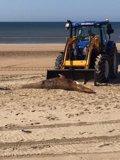 Hallan muerta una cría de ballena en una playa de Lepe