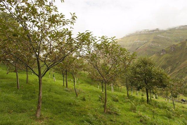 Foto: FNYH elabora un manual sobre gestión del bosque atlántico (EUROPA PRESS/FNYH)