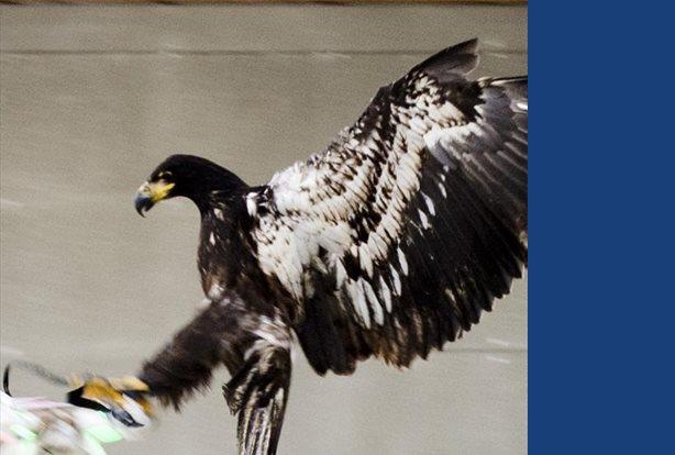 Elaboran un código de uso para que los drones no perturben a los animales HANDOUT . / REUTERS