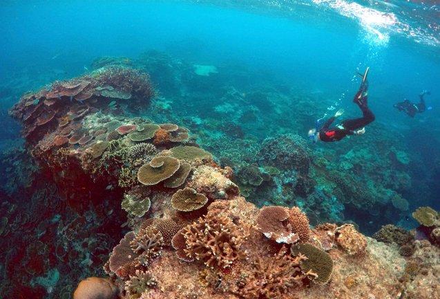 Foto: Australia excluye la Gran Barrera de Coral del informe de la UNESCO sobre turismo y cambio climático (DAVID GRAY / REUTERS)
