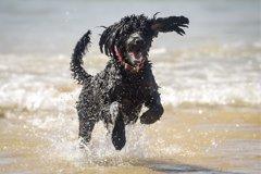 ¿Quieres saber si tu perro está feliz? ¡Ahora un...