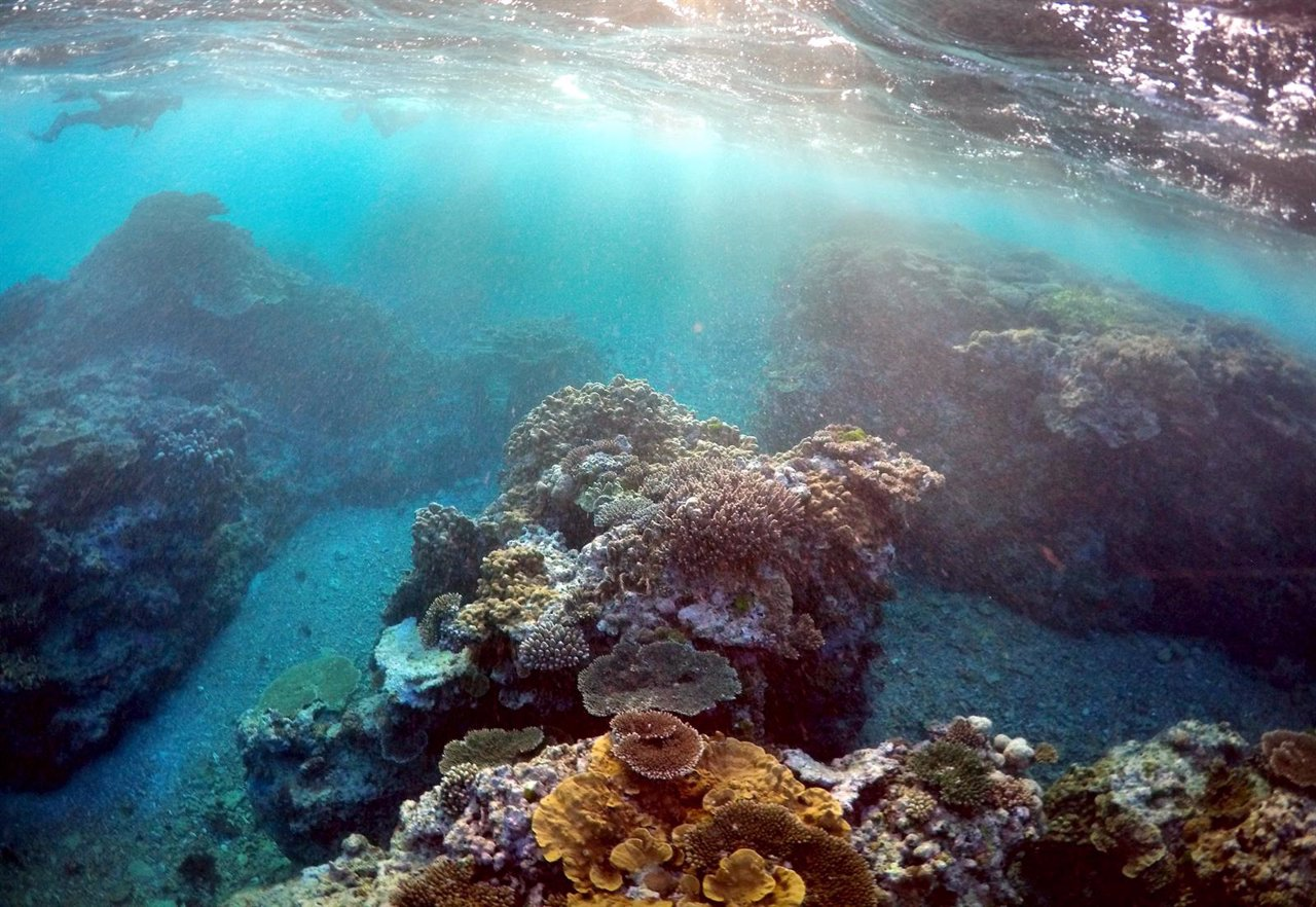 Científicos informan de la muerte del 35% de los corales en zonas de la Gran Barrera