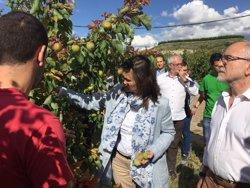 La calamarsa fa malbé 3.340 hectàrees de fruita dolça i 2.150 de cereals a Lleida (GENCAT)