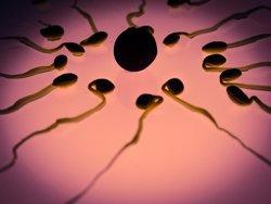 La Justícia francesa autoritza una espanyola a usar l'esperma del seu marit mort (PIXABAY)