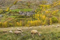 Els espais protegits dels Pirineus treballaran en xarxa amb el programa Green (O. RODBAG / GOVERN)