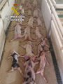 Foto: Expediente sancionador de la Junta a los acusados de aplastar a 72 lechones