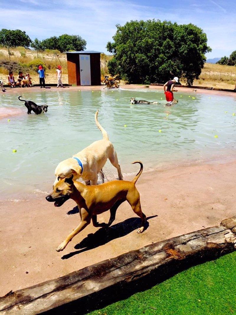 La primera piscina para perros de la regi n abre en brunete for Piscina para perros madrid