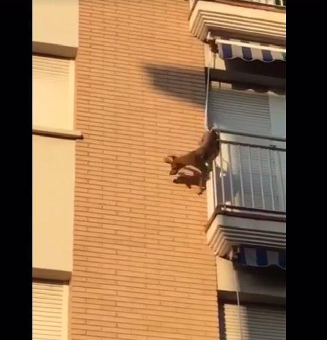 Perro desatendido en una terraza se lanza al vacío