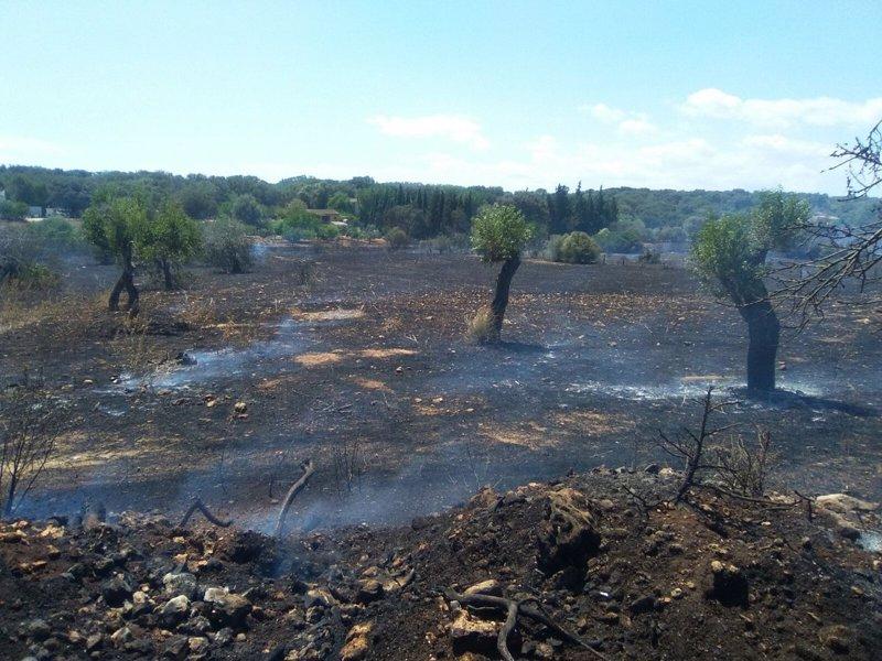 Controlado un incendio en Torrent de Vinagrella que ha quemado cuatro hectáreas de masa forestal y agrícola