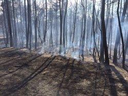 Les zones de bosc aclarides es regeneren millor després d'un incendi (BOMBERS)