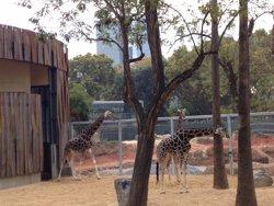 EL Zoo de Barcelona ensenya a nens com cuidar els animals amb activitats d'estiu (ZOO DE BARCELONA)