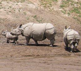 Científicos instan a detener la extinción de la megafauna terrestre (WIKIMEDIA)