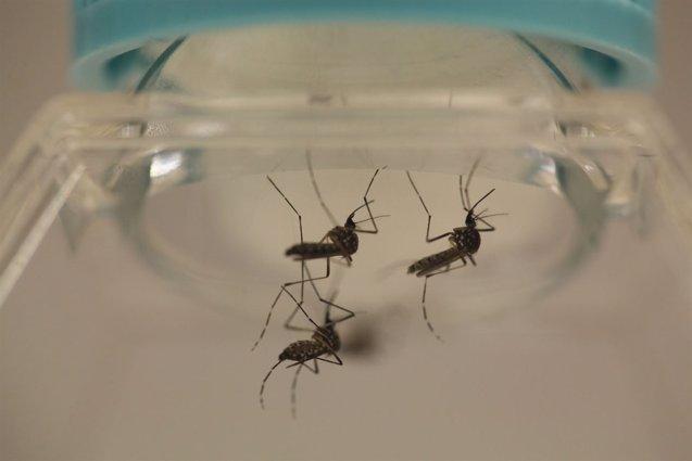 Foto: Paraguay detecta dos casos de bebés con microcefalia por el zika (REUTERS)