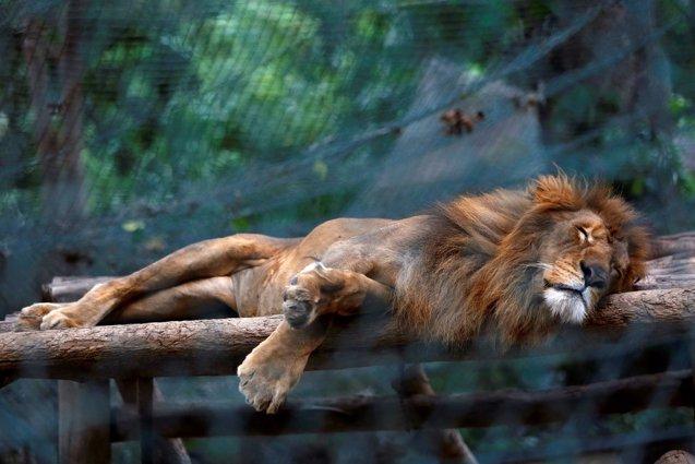 Foto: Decenas de animales se mueren de hambre en los zoológicos de Venezuela por falta de recursos (REUTERS)