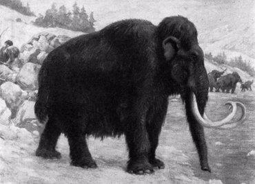 El gurú coreano de la clonación se lanza a revivir al mamut (CHARLES ROBERT KNIGHT )