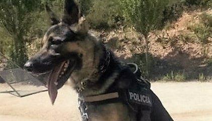 Accepta quatre anys de presó per agredir a cops de martell tres agents i un gos policia