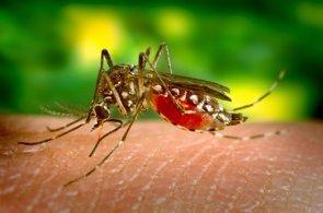 Aumentan a 237 los casos confirmados de infección por virus Zika en España (WIKIPEDIA)