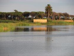 Recullen més de 32.000 firmes per protegir les aus del Delta del Llobregat (Barcelona) (BCL)