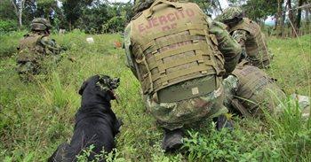 El Ejército de Colombia anuncia la detención de cinco miembros del ELN en...