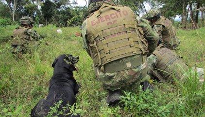 El Ejército de Colombia anuncia la detención de cinco miembros del ELN en Antioquia