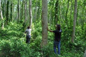 Foto: Bonn Challenge Latinoamérica, una iniciativa para la reforestación (FABER-CASTELL)