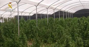 Intervenida la mayor plantación de marihuana de Andalucía