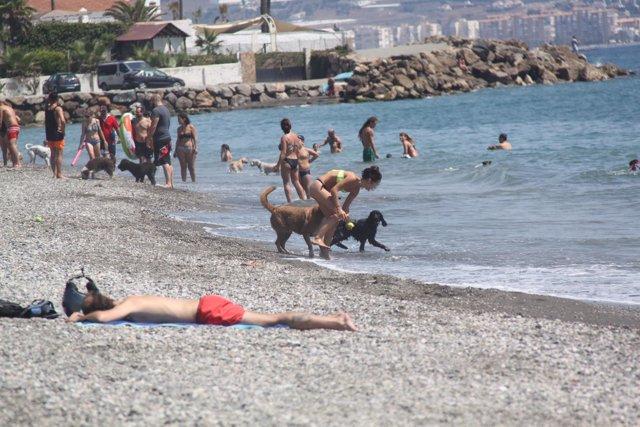 Playa canina Torre del Mar