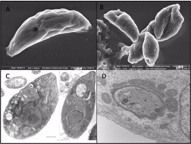 Foto: Nuevo método para detectar en el jamón serrano el parásito de la toxoplasmosis (UV)
