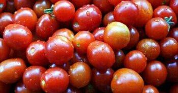 El tomate de Salamanca, de la huerta a casa vía Whatsapp