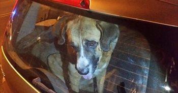 Policías locales hallan muerto un perro en un vehículo estacionado en un...