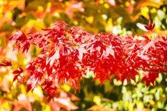 Cómo combatir el desánimo por la llegada del otoño y el...