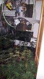 Desmantelada una sofisticada plantación de marihuana en una casa de Miraflores