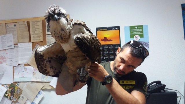 Águila Rescatada