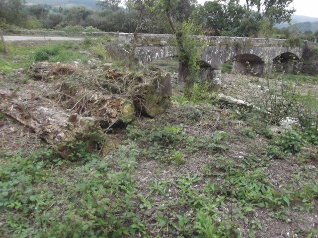 Talas En El Bosque De Galería En Torno Al Puente De Meca Y El Río Bayones En Uci